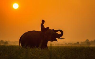 Une Histoire de Lâcher-prise et d'éléphant