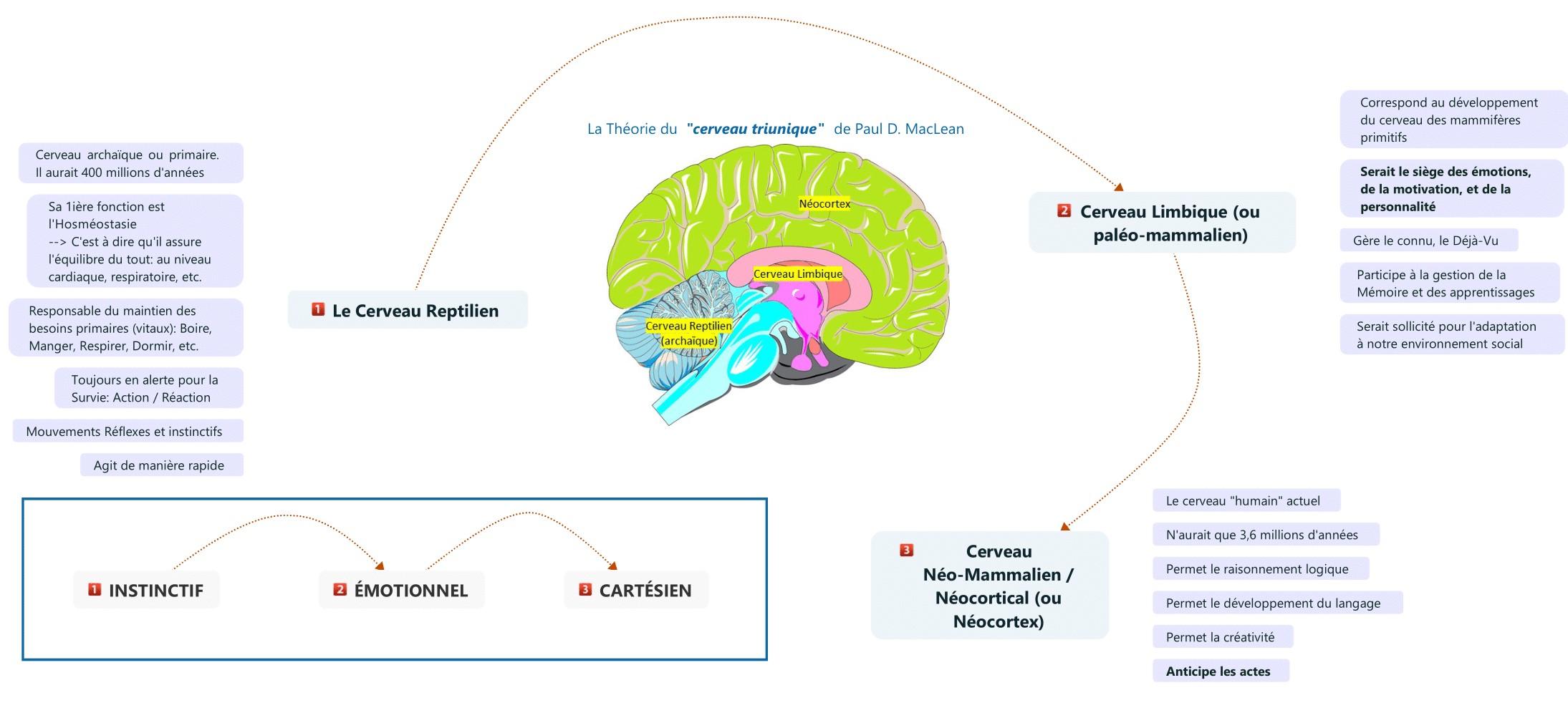 cerveau triunique de Paul D. MacLean
